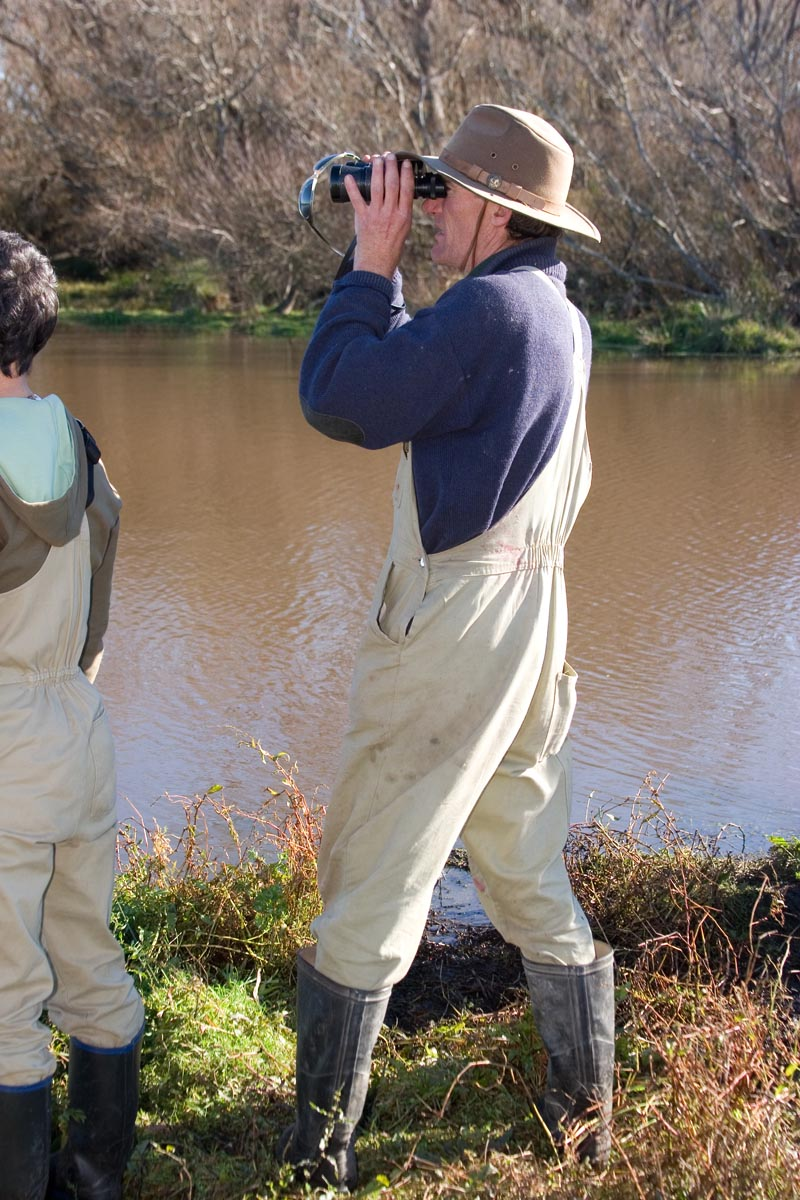 Brown Teal Release, May 16 2007