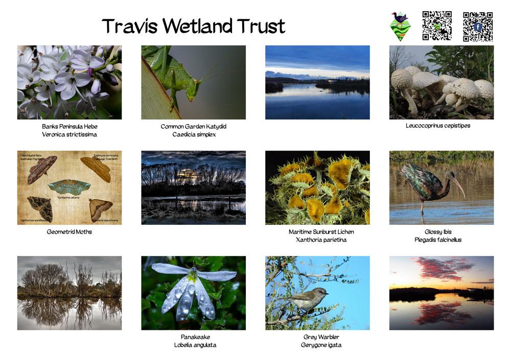 Travis Wetland Calendar 2021, Back Cover