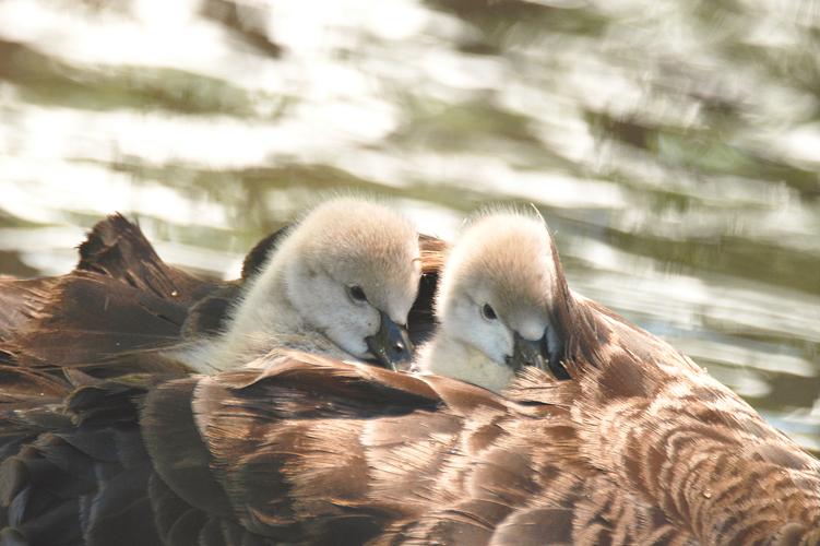 Birds Of Travis Wetland